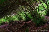 日吉神社-つつじのジャングル - Mark.M.Watanabeの熊本撮影紀行