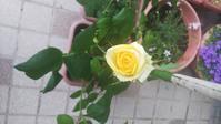 卯の花くたし   3017 - 萩セミナーハウスBLOG