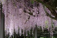 5/17 雨の日の散策 - 空 -Sora-