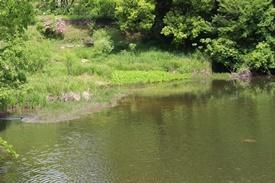 うらら池のカイツブリ - ある日ある時