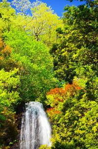 新緑の猿尾滝 - 風の香に誘われて 風景のふぉと缶