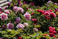春の花咲く建仁寺 - 花景色-K.W.C. PhotoBlog