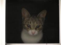 猫記念日めじろおしの5月  - 3色猫だんご+1