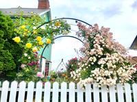 思い描いたシーンが成功したパターン(自分的に)とマリールイーズドゥララメー♡ - 薪割りマコのバラの庭