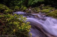 梅雨の渓流 - 撃沈風景写真