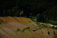 田植えの時季 - 風の香に誘われて 風景のふぉと缶