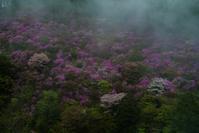 西明寺のミツバツツジ - 鏡花水月