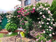 ベンチアーチのルポールさまとアントニオガウディandオーブさまなどなど♡ - 薪割りマコのバラの庭