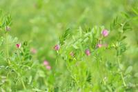 野の花 - 木洩れ日 青葉 photo散歩