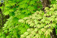 植物イキイキ~、お花ぞくぞく... - 乗鞍高原カフェ&バー スプリングバンクの日記②