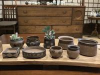 小さな植木鉢と花器展・2021〜7 - アオモジノキモチ