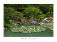水連の咲く庭 - Minnenfoto