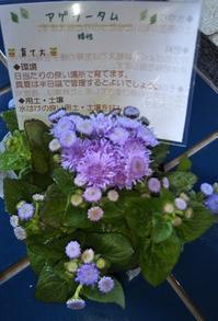 通販で【春花苗10個セット】を買ってみた! - 健気に育つ植物たち