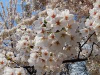 2021: 春は来る、花は咲く - 見知らぬ世界に想いを馳せ