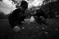今日の収穫は、四つ葉のクローバーと、花飾り20210522 - Yoshi-A の写真の楽しみ