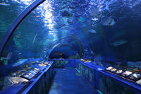 しながわ水族館「トンネル水槽」①~古代魚ターポンとサメたち(August 2020) - 続々・動物園ありマス。