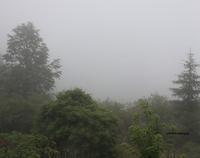 梅雨に入りかけ??(*_*) - 標高480mの窓からⅡ