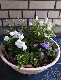 通販で【春花苗10個セット】を買ってみた→植えてみた!! - 健気に育つ植物たち
