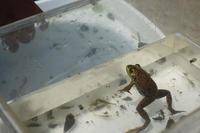カエルのキモチ - YAJIS OFFICE BLOG