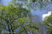 水芭蕉咲く尾瀬#1 - 風の彩りー3