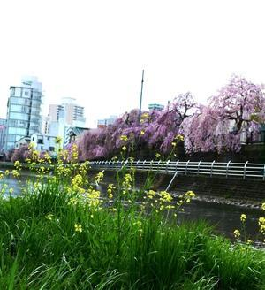 在所の春 - One photograph