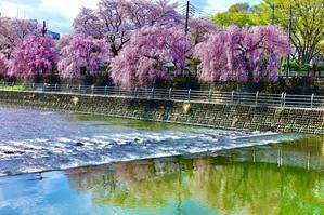 在所の春その2 - One photograph