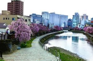 在所の春その3 - One photograph