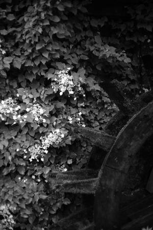水車と花 - Slow Photo Life