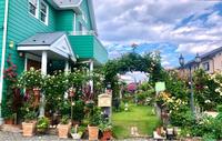 無事だった倉庫ピエールとルポールロマンティーク♡と巣立ちの時♫ - 薪割りマコのバラの庭