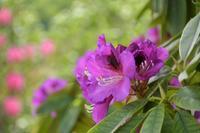 薔薇が美しく咲くガーデンへ~あしかがフラワーパークⅢ - 季節の風を追いかけて
