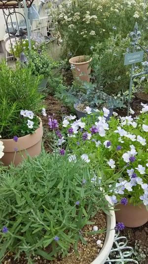 今日の庭 -
