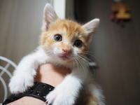【保護した子猫・3日目】やっぱり・・かわいいです。 - SAMのLIFEキャンプブログ Doors , In & Out !