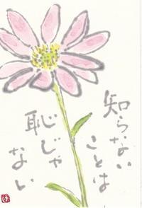 ミヤコワスレ「知らないことは恥じゃない」 - ムッチャンの絵手紙日記