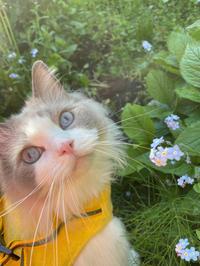 忘れな草 - 土筆の庭