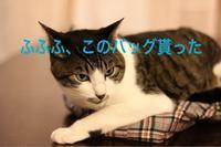 にゃんこ劇場「にゃんこはバッグ好き」 - ゆきなそう  猫とガーデニングの日記