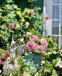 雨の前に最後のバラ撮影♡ - 薪割りマコのバラの庭