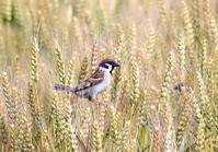 ある一日(探鳥で出かけ逢えた鳥達) - 私の鳥撮り散歩