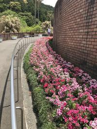 佐野植物公園 - handmade atelier uta