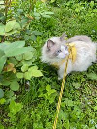 空くんのお散歩 - 土筆の庭
