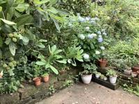 小さな植木鉢と花器展・2021〜13 - アオモジノキモチ