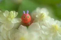 はらぺこあおむし - お花びより