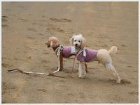 わぁ〜い、砂浜走ったぞ~(v´∀'*) イエーイ♪ - さくらおばちゃんの趣味悠遊