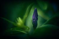 flower(2cut) -     ~風に乗って~    Present