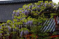 藤咲く春日大社 - 花景色-K.W.C. PhotoBlog