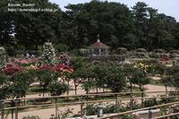 敷島公園ばら園#3 - 風の彩りー3