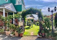 今朝のバラ♡今朝の庭♫ - 薪割りマコのバラの庭