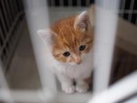 【保護した子猫成長記 5日め、6日め】必殺!首傾げポーズ(笑) - SAMのLIFEキャンプブログ Doors , In & Out !