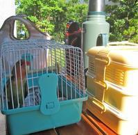 鳥たちとランチ。 - 昭和ラボラトリー