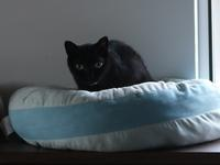 猫のお留守番 ジジちゃん編。 - ゆきねこ猫家族