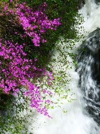 奥日光の春(1)竜頭の滝トウゴクミツバツツジ - 『私のデジタル写真眼』